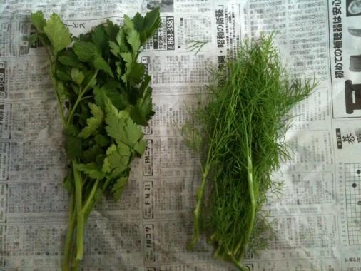 森岡さんの野菜